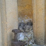 Four or five birds nesting in a doorway of Toddington Church
